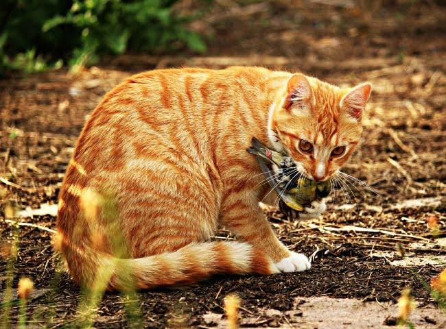 Đồ Ăn Thức Uống Nguy Hiểm Cho Mèo