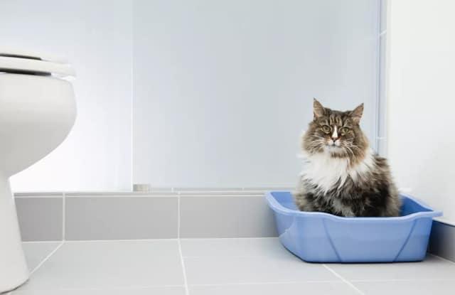Tiêu Chảy Ở Mèo