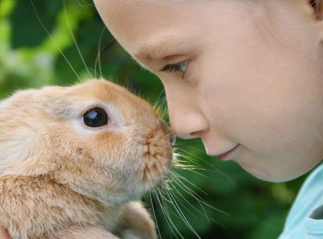 trẻ em mấy nuổi nên nuôi thỏ