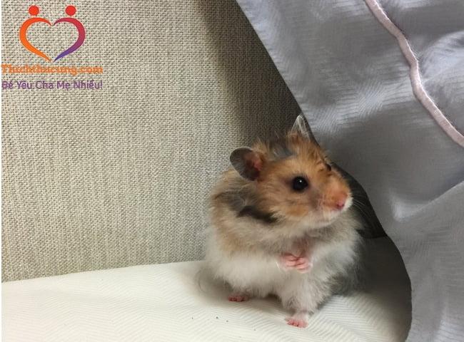 trieu chung chuot hamster bi benh
