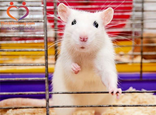 bệnh ung thư ở chuột hamster