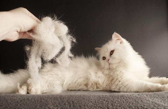 Xử Lý Lông Mèo